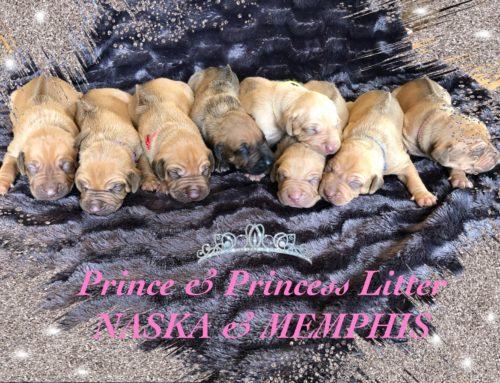 La Prince & Princess Litter est née le 28 août 2019